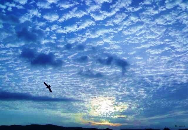 Air ecosystem