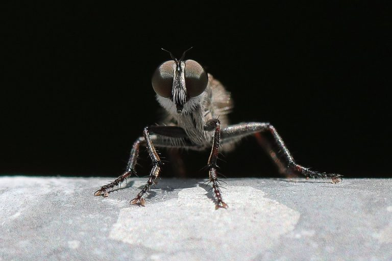Flies and Mosquitoes: Discovering the Life Cycle of Two-Winged Members of the Vast Insect Group