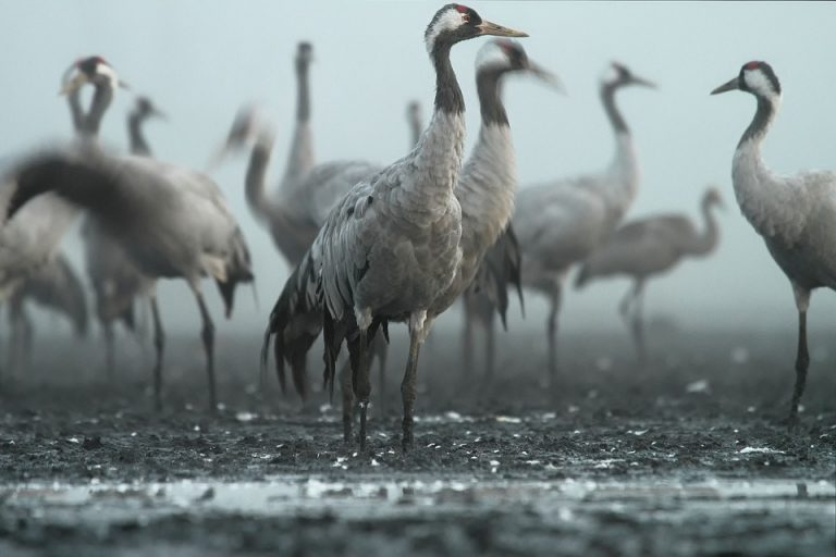 Animal Migrations: Learn About the Incredible Journeys of Birds, Fishes and Others (Part 2)